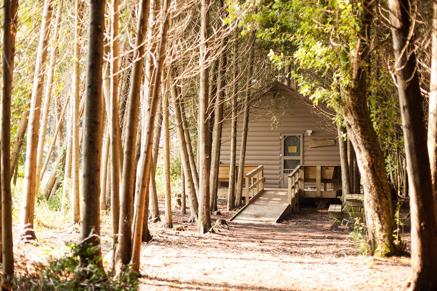 Scenic frontal view of a cabin surrounded by cedar trees.